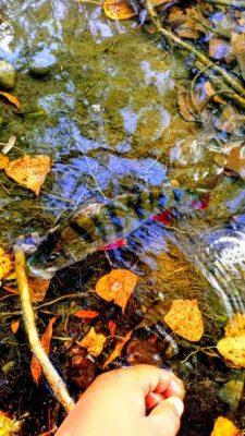 La pêche en automne, pensez aux carnassiers
